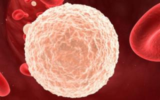 Фемофлор 16: расшифровка, норма у женщин, какие инфекции входят?