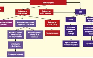 Лейкоциты в моче при беременности повышены: причины, лечение