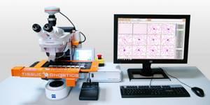 Откуда берутся нормобласты в общем анализе крови