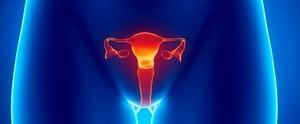 Трансабдоминальное УЗИ органов малого таза у женщин – как делают?