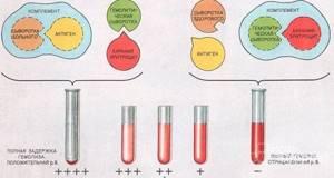 rw в анализе крови – что это?