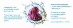 Норма моноцитов в крови у детей и женщин, причины отклонения