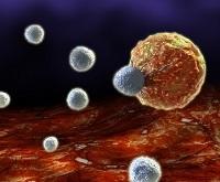Что такое моноциты в анализе крови и что делать, если они повышены?Что такое моноциты в анализе крови и что делать, если они повышены?