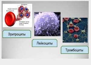 hct в анализе крови: расшифровка, нормы
