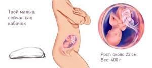 УЗИ на 23 неделе беременности: нормы, фото
