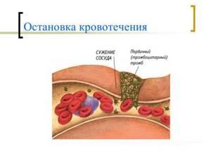 Повышенная свертываемость крови при беременности: симптомы, причины, лечение