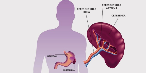 УЗИ брюшной полости и почек: подготовка, расшифровка, нормы