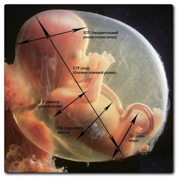УЗИ на 18 неделе беременности: фото, особенности