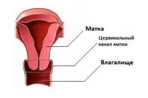 Мазок из цервикального канала при беременности: как берется, расшифровка