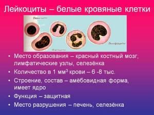 Лейкоциты в крови понижены у женщин: причины, что это значит?