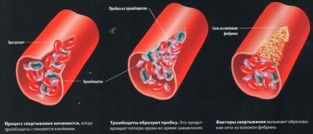 Норма свертываемости крови у женщин, детей, мужчин и отклонения от нее