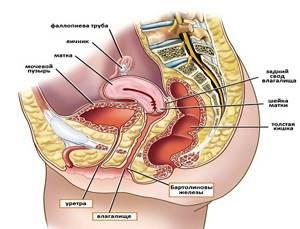 УЗИ органов малого таза у женщин: подготовка, как делают и когда лучше?