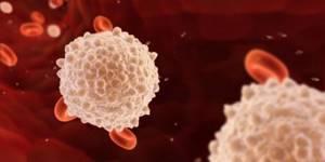Лейкоциты в крови повышены у мужчин: причины, что предпринять?