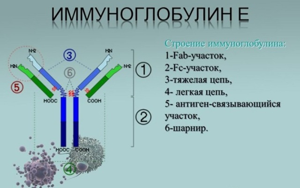 Анализ крови на иммуноглобулин Е: расшифровка, что покажет?