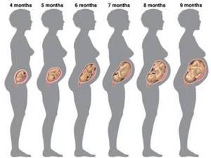 Фото УЗИ размера плода на 15 неделе беременности
