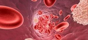 Норма лейкоцитов в крови и причины отклонения
