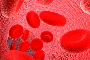 Измененные и неизмененные эритроциты в моче: норма, причины повышения