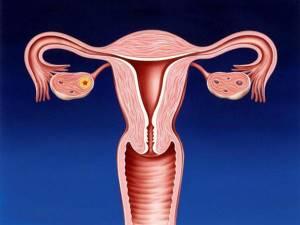 УЗИ шейки матки при беременности – как делают?