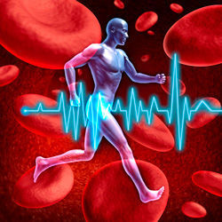 Эритроциты в крови повышены у женщин: причины, лечение