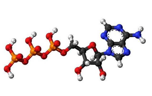 Что значит агрегация тромбоцитов с адф понижена в анализе