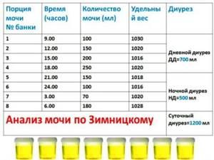 Анализ мочи по Зимницкому: как собирать, что показывает?