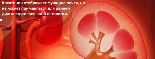 Норма креатинина в крови у женщин, мужчин и детей