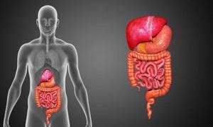 Колоноскопия кишечника под наркозом: делают ли и как готовиться?