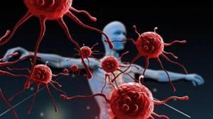 Иммунологический анализ крови: расшифровка, нормы