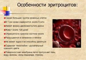 Эритроциты в крови повышены: что это значит, причины