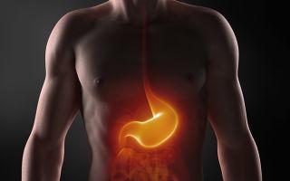 УЗИ желудка: что показывает, как делается и как подготовиться?