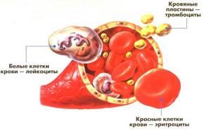 Норма тромбоцитов в крови и отклонение показателей в анализе