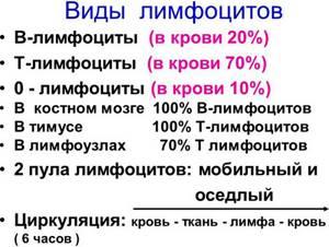 Норма лимфоцитов в крови у женщин по возрасту (таблица)