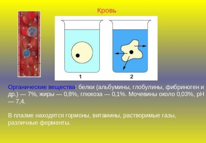 Альбумин в крови: что это такое, норма, причины повышения и пониженияАльбумин в крови: что это такое, норма, причины повышения и понижения