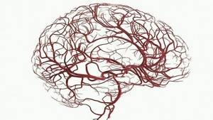РЭГ сосудов головного мозга: [обследование и расшифровка]