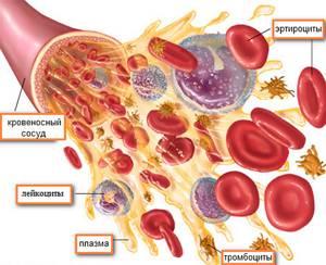 Функции лейкоцитов – за что отвечают?
