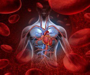 Норма лимфоцитов у мужчин в крови: какой должна быть?