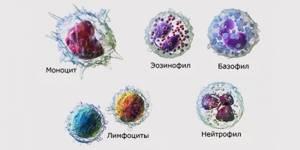 Лейкоциты в крови повышены: что это значит, причины, что делать?