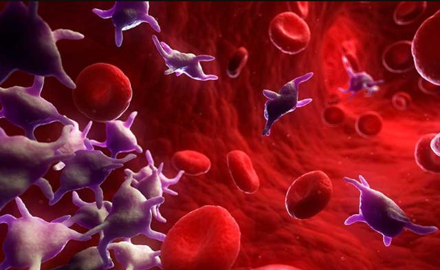 Как повысить тромбоциты в крови быстро: продукты, эффективные способы