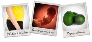 УЗИ на 16 неделе беременности: фото, размер плода, особенности