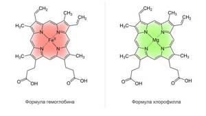 Витамины для повышения гемоглобина в крови – какие назначают?