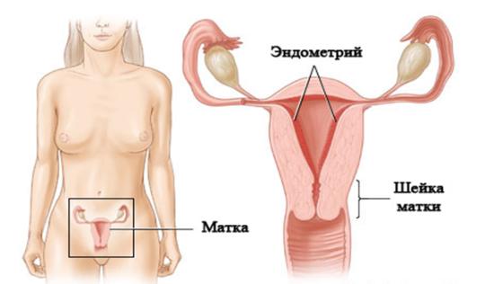 Аспирационная биопсия эндометрия: что это, как проводится процедура?