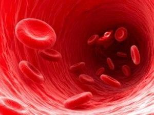 Общий белок в крови: что это такое, норма и причины отклонений