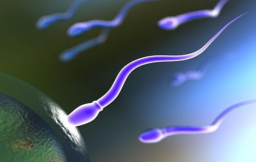 Расшифровка спермограммы - результаты анализа: норма и отклонения