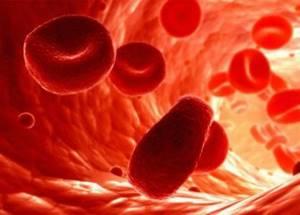 Продолжительность жизни эритроцитов – сколько составляет?