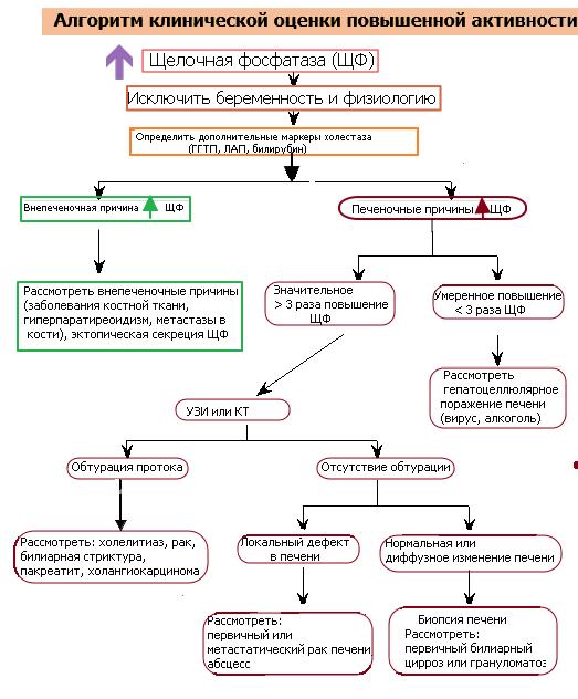 Щелочная фосфатаза повышена: что это значит, причины