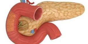 Что показывает УЗИ брюшной полости?