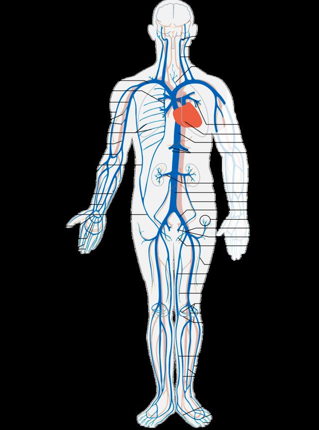 МРТ суставов: особенности, противопоказания