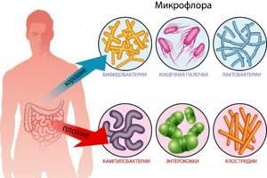 enterococcus faecalis в мазке у женщин и мужчин: о чем это говорит?