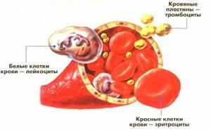 Функция тромбоцитов: какую роль играют в крови человека и за что отвечают?