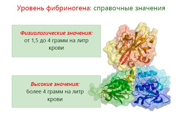 Фибриноген повышен: что это значит, нормы